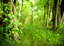 gandex.ru-26_8086_summer-forest